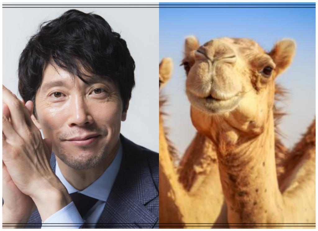 佐々木蔵之介さんとラクダの画像